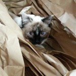 Marie playing in some paper packaging